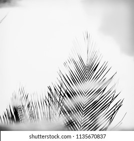 Palm tree fronds in hazy black and white