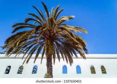 A palm tree in front of an arabic building in Tangier, Morocco