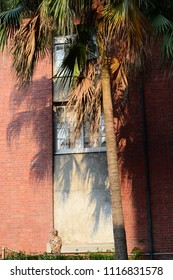 Palm tree in front of a brick wall with shadow