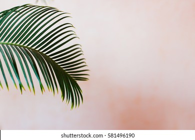 Palm tree in front of the wall - pastel colors - beautiful palm leaf summer concept