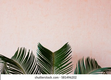 Palm tree in front of the wall - pastel colors - beautiful palm leaves summer concept
