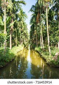 Palm tree in garden with long canal.