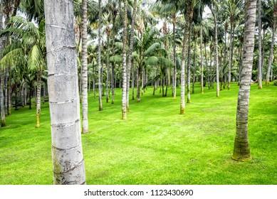 Palm tree garden on Tenerife
