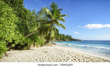 A Palm tree and granite rocks in the white sand on seychelles beach. Simply paradise...
