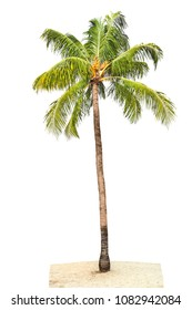 Palm tree green leaves isolated on white background. Nature object