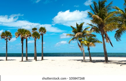 Palm Tree Group at the Beach
