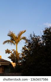 Palm tree growing in suburbia.