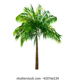 Palm tree isolated on white background 3d rendering