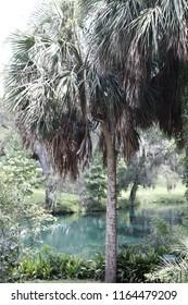 Palm Tree Lagoon