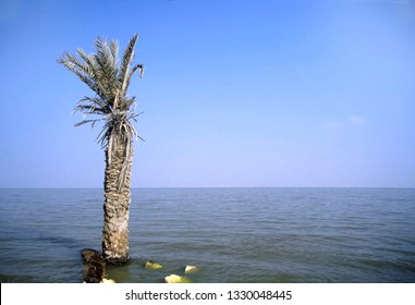 Palm tree in the lake Qaroun in Elfayoum south of Cairo, Egypt.