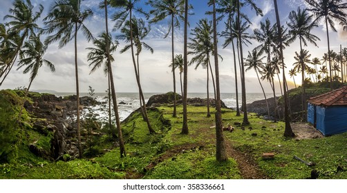 Palm tree landscape of Goa - India
