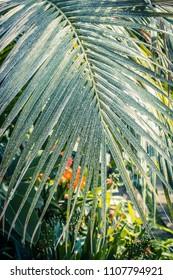 Palm tree leaf close up shot
