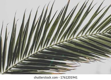 the palm tree leaf clouse up