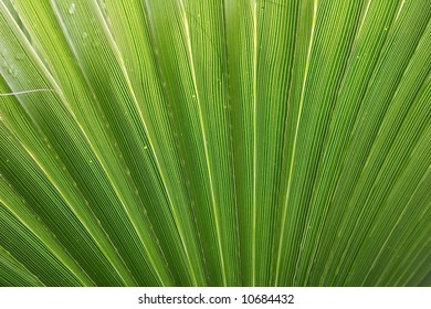 palm tree leaf  frond green radian texture