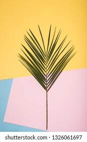Palm tree leaf on colorful pop art background. Abstract conception.