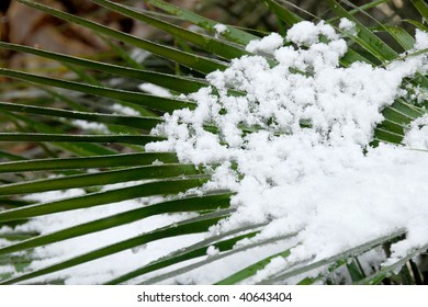 Palm tree leaf with snow