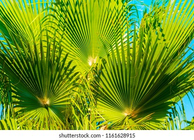Palm tree leaf, sunlight and beautiful sky landscape. Travel, Tourism, vacation concept, Tropical  background. Closeup for the adorable background and pattern.