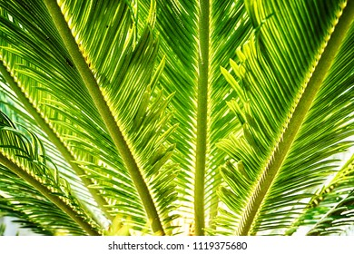 palm tree leaf texture as nice natural background