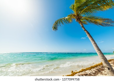 Palm tree leaning over the sea in Raisins Clairs beach in Guadeloupe, French west indies. Lesser Antilles, Caribbean sea