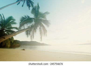 Palm tree leans towards the Pacific Ocean in tropical paradise.