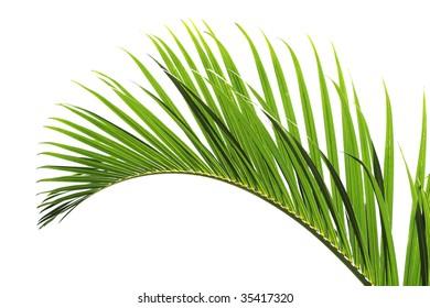 palm tree leave close-up