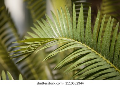 Palm tree leaves. Abstract green bokeh background. Tropical summer background