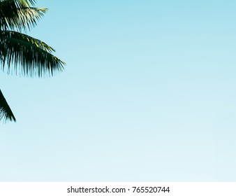Palm tree leaves with clear blue sky space. Beach vibes. Minimalist, Wallpaper, Background concept.