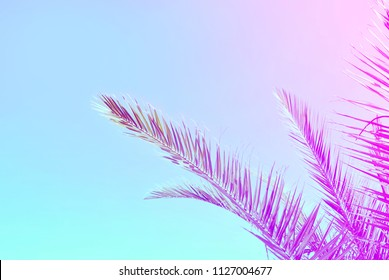 Palm tree leaves isolated on vibrant colorful background