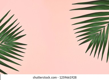Palm tree leaves on coral background.