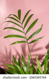 Palm tree leaves on pink background