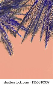 Palm tree leaves on top on color dusty orange sky background