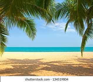 Palm tree leaves over luxury beach