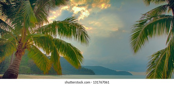Palm tree leaves under rainy sky on the beach