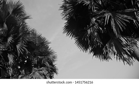 Palm tree leaves with white sky background photo