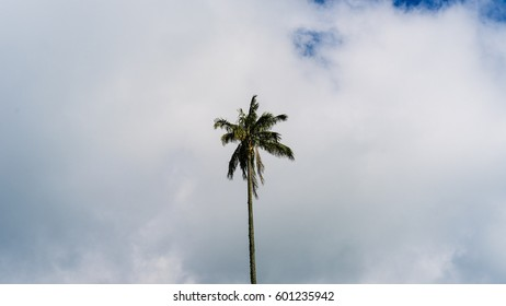 A palm tree in mostly cloudy skies.
