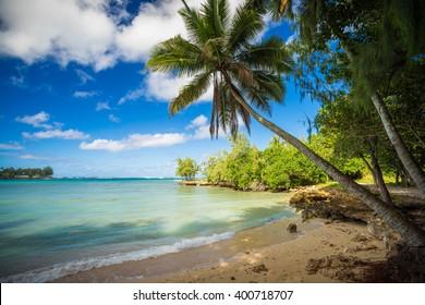 palm tree in a nice quiet bay, oahu, hawai'i