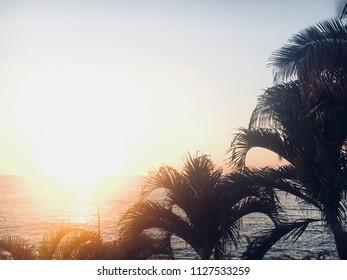 Palm tree ocean view