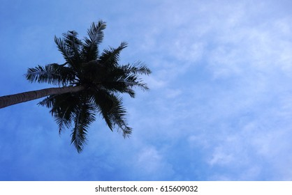 A palm tree on a background of clouds. Green leaves of palm tree and blue sky with white clouds. Take a place for an inscription. The sea, the rest and travel are associated with this photo