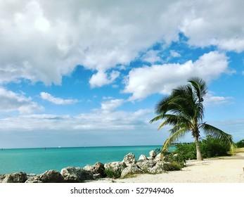 Palm tree on the beach.