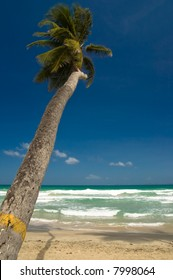 Palm tree on the beach, Caribbean sea in the background.