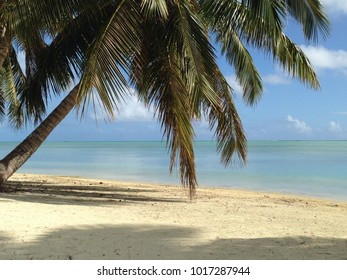 Palm tree on the beach with ocean background