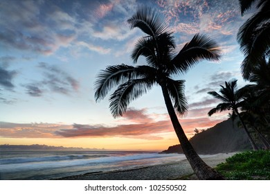 Palm tree on beach at sunset. Reunion Island
