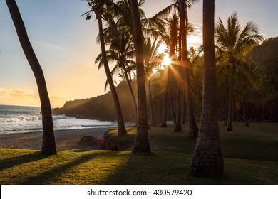 Palm tree on beach at sunset. Reunion Island