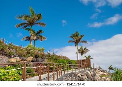 Palm tree on beach in sunshine on the Spanish island Fuerteventura