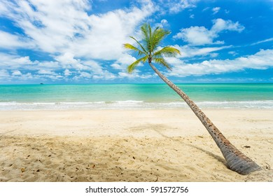 A palm tree on the beach in Tropical North Queensland, Australia