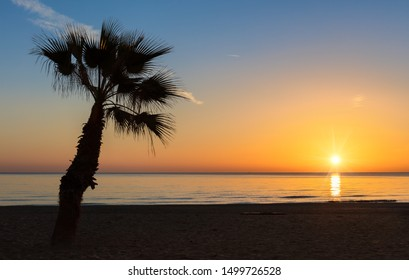 A palm tree on the beach in a warm light mood. A beautiful sunrise over the Mediterranean in La Mata north of the Spanish city of Torrevieja. The sun is reflected in the water.