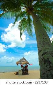 palm tree on a beautiful tropical beach
