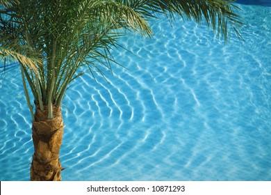 palm tree on blue hotel pool