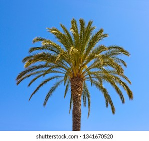 Palm tree on the blue sky background