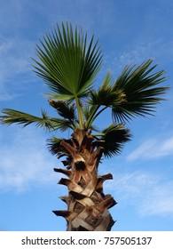 Palm tree on blue sky background